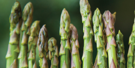 asparagus Seeds of Change