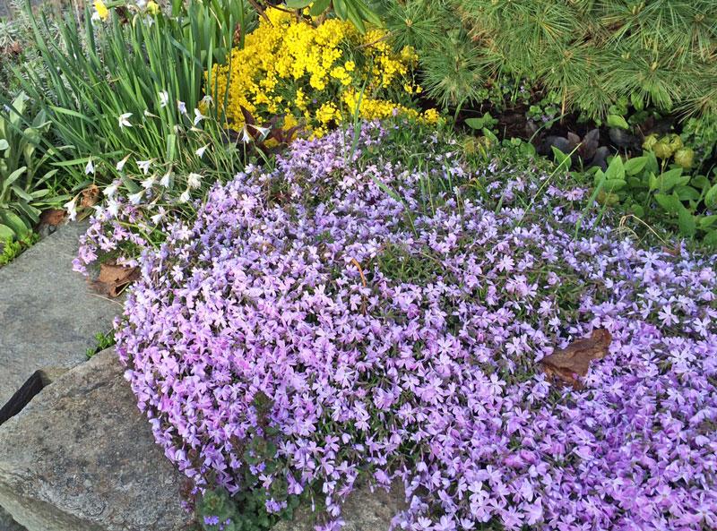 garden colors April 2016