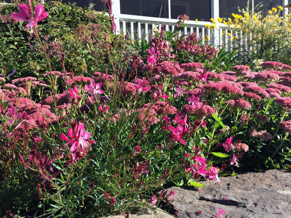red sept garden