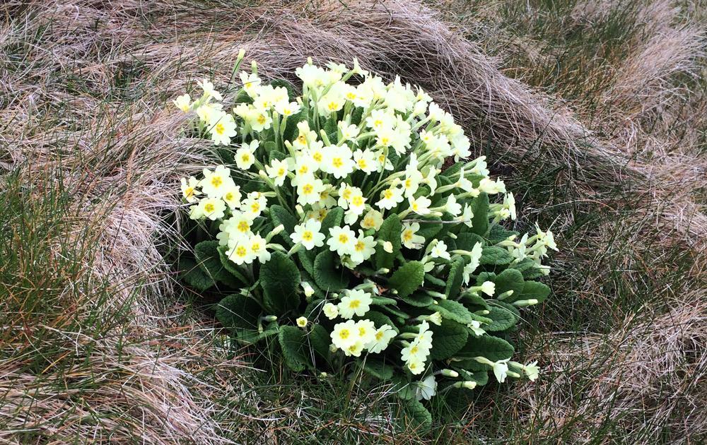 Dingle Peninsula flowers